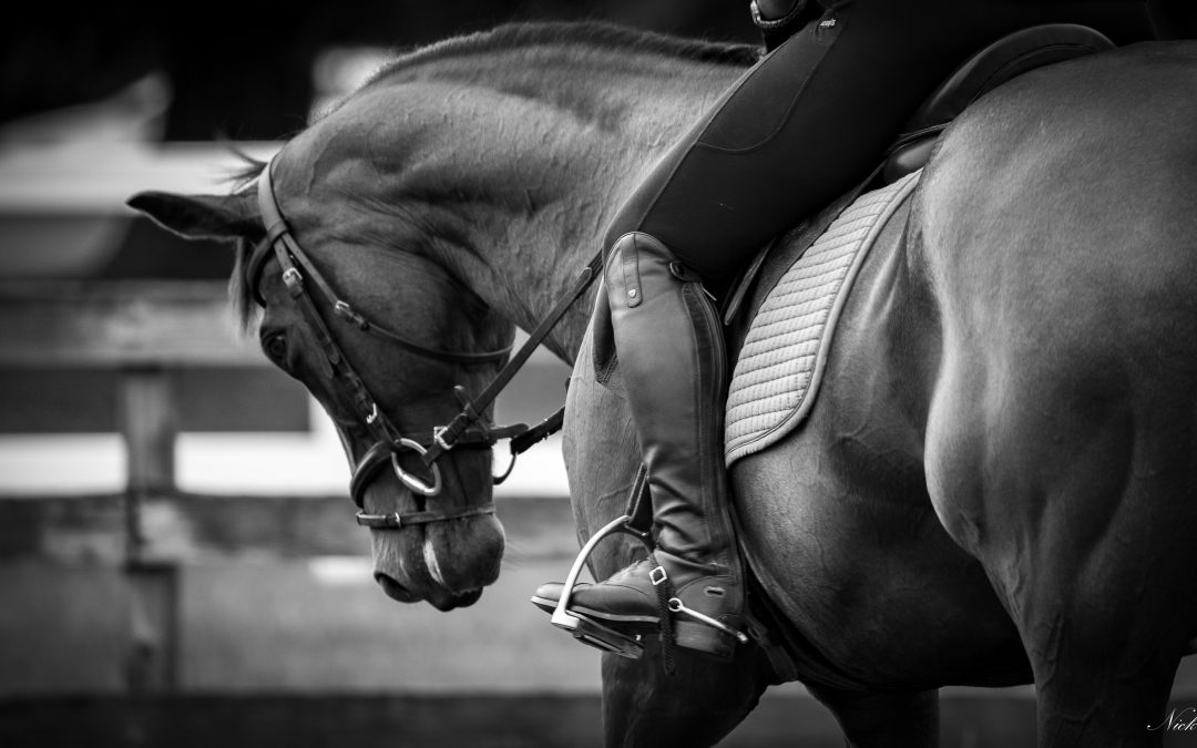 Meadows TRI Equestrian Autumn Pony Series-Saturday 11 September 2021 RESULTS